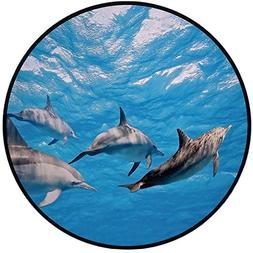 Printing Round Rug,Dolphin,Underwater Photography of Dolphin